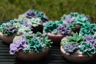 cactus flower pot