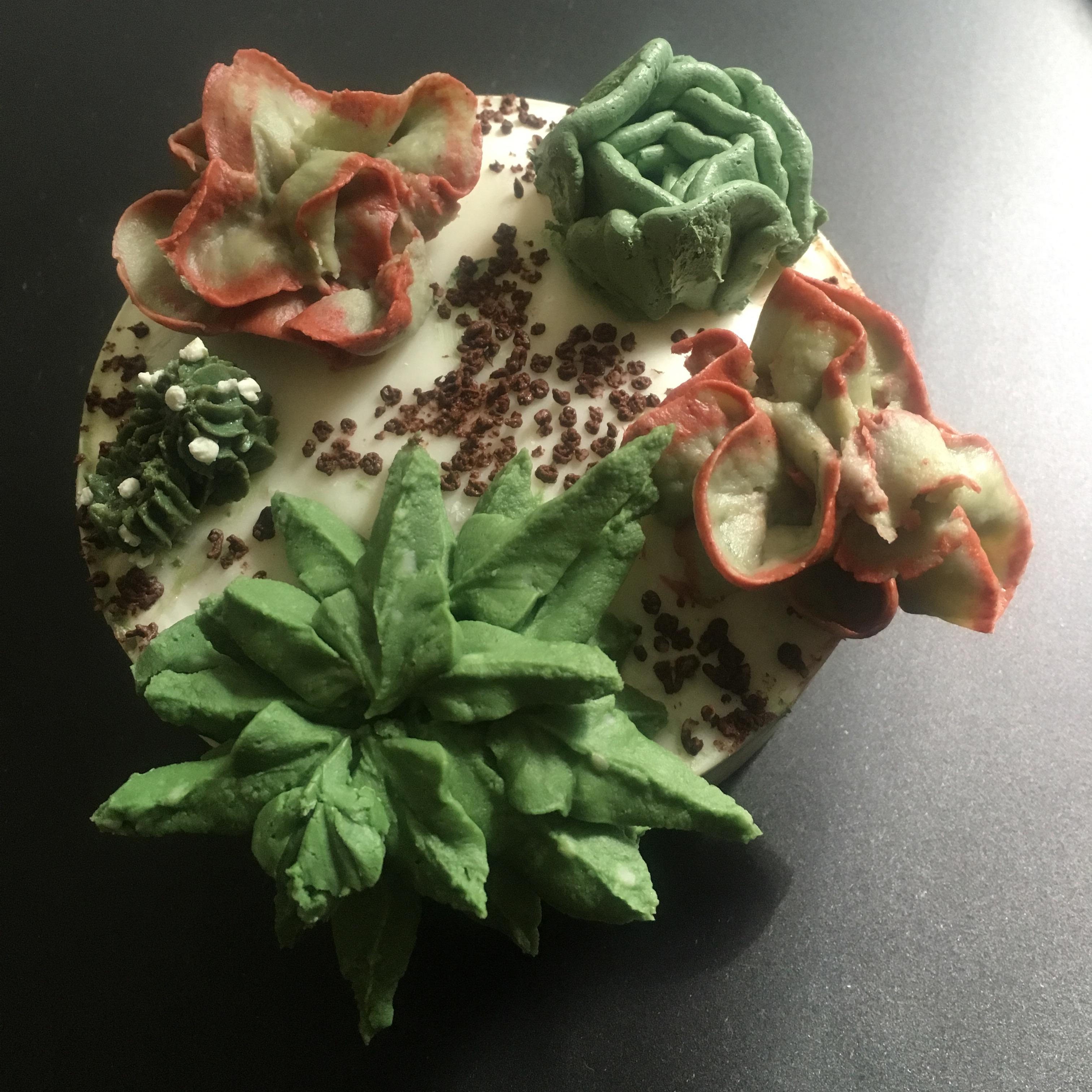 i love succulents