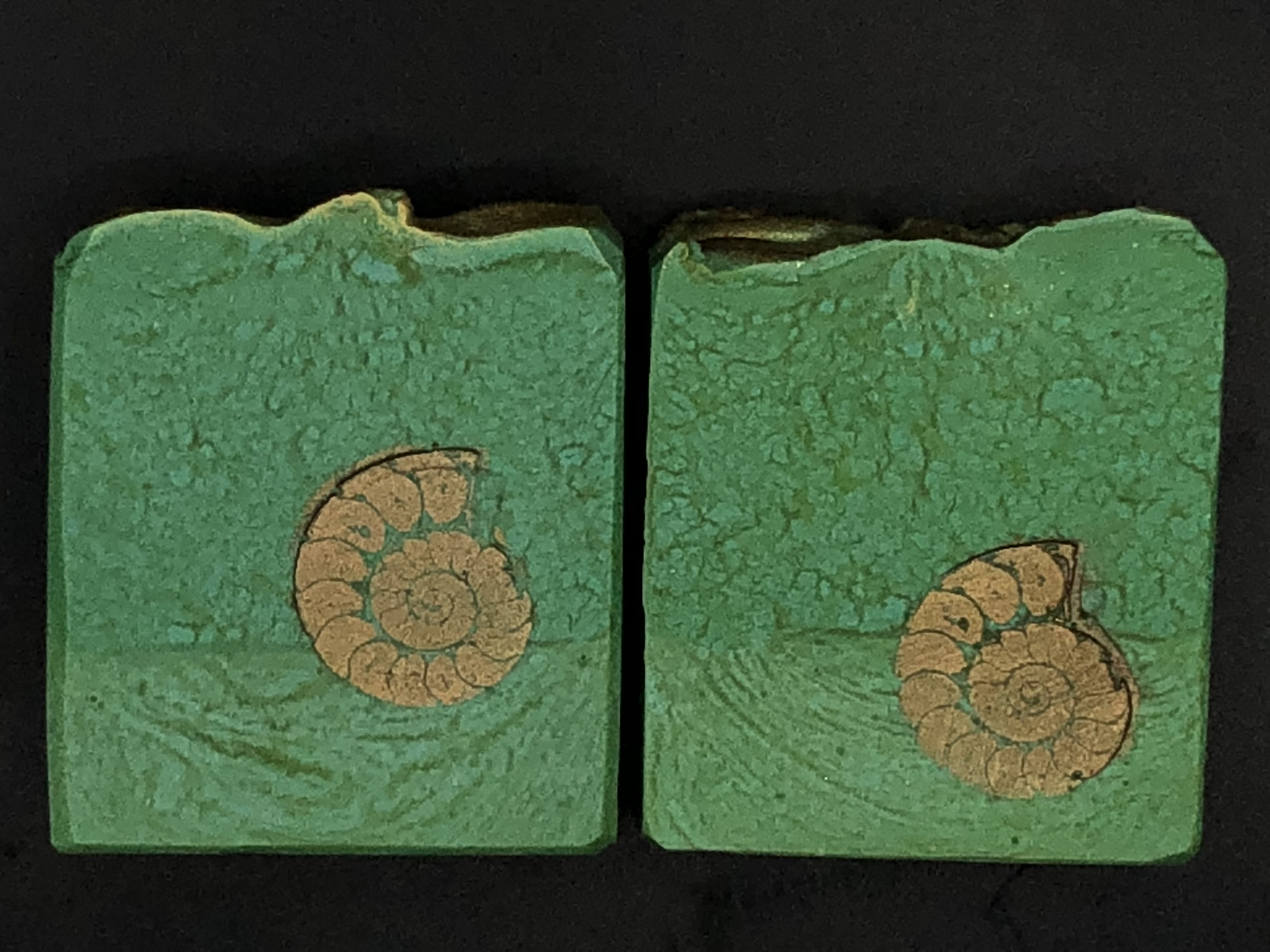 ammonites those that came before us